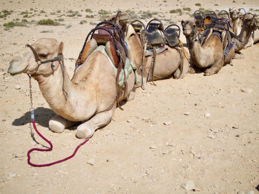 Drei Tage zwischen Beduinen, Totenstille & Meine Beauty- Survival-Tipps für die Wüste Negev